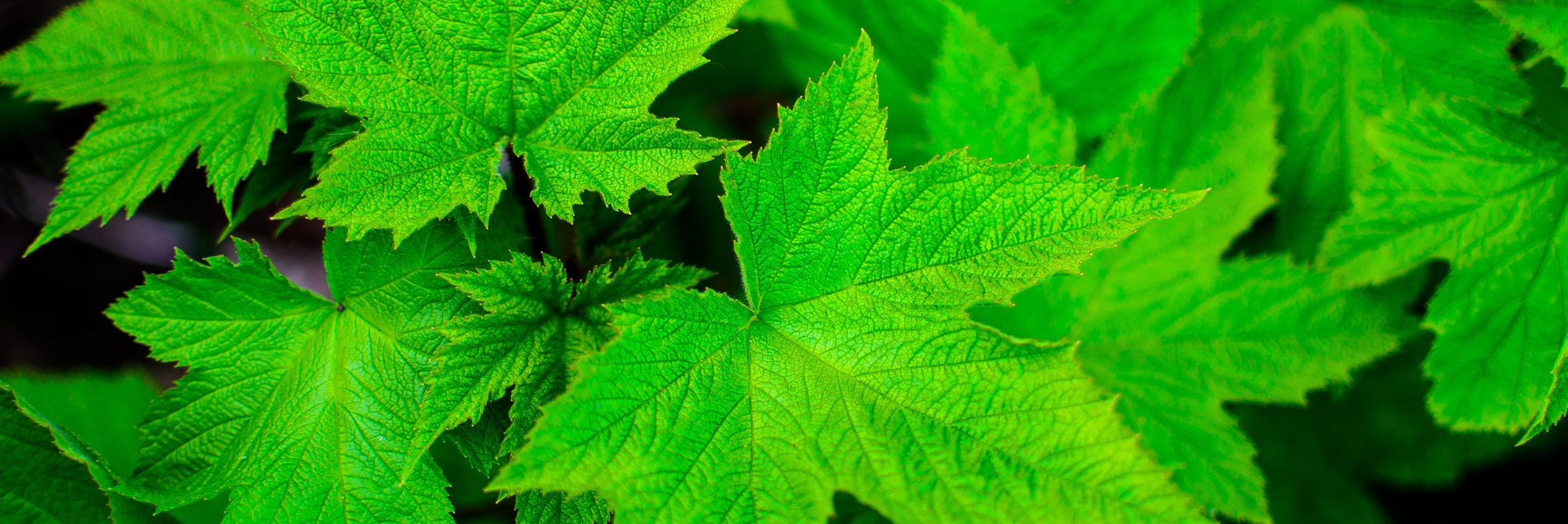 close-up-view-closeup-green-21392
